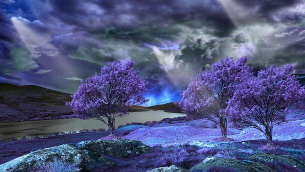 Sunbeams On A Purple